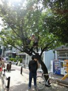 02_pop-up-tree-shop_customer_2