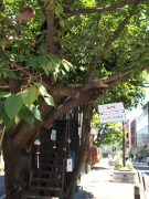 04_pop-up-tree-shop_sign-tie_japanese_cat-street_smaller